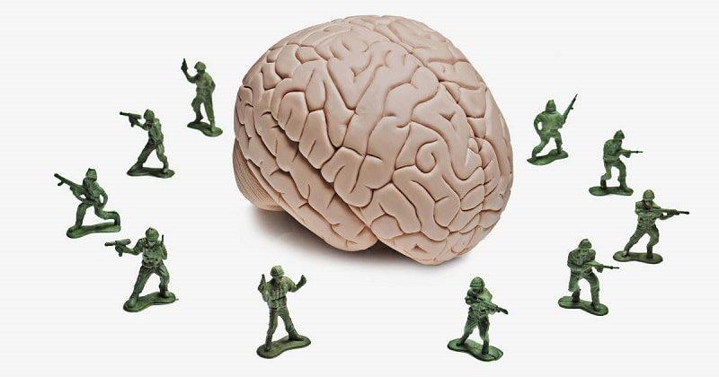 خواص-گشنیز-برای-محافظت-از-مغز