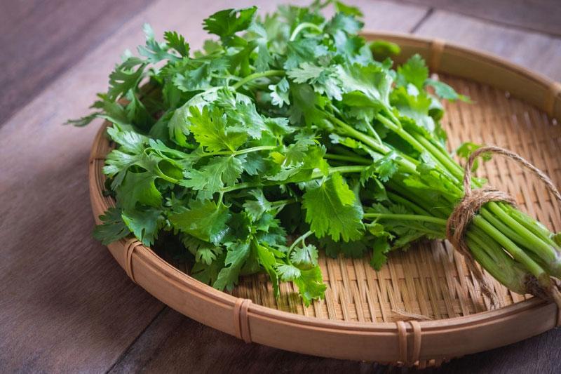 خواص سبزی گشنیز