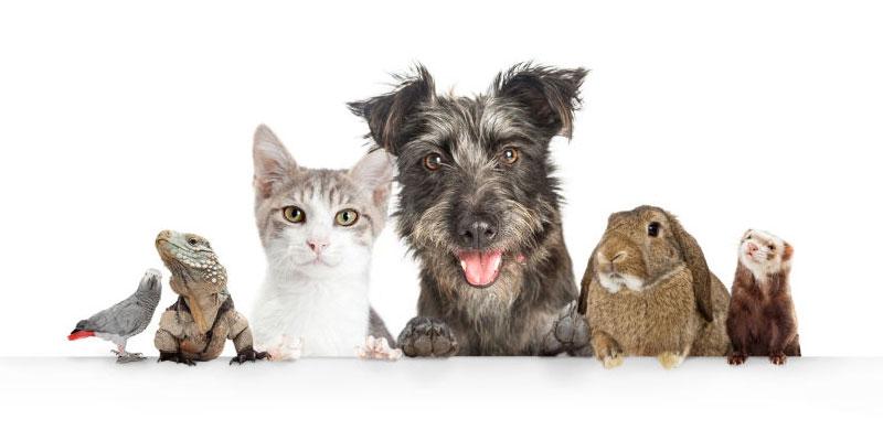 درمان افسردگی بدون دارو با حیوانات خانگی