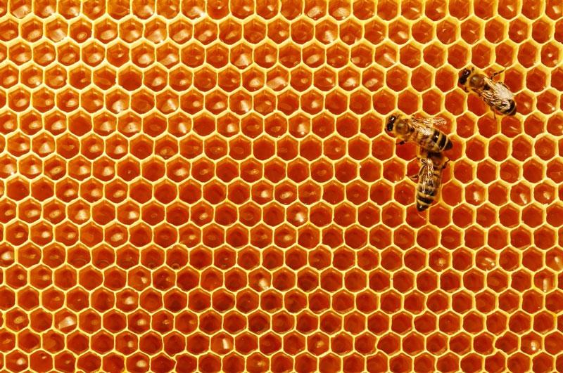 لانه زنبور