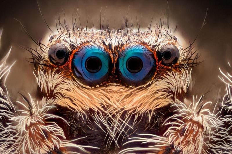 چشم حشرات