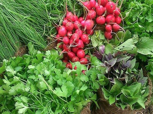 قیمت روز انواع سبزی