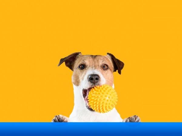 بهترین اسباب بازی سگ