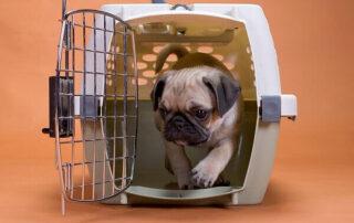 باکس-حمل-سگ
